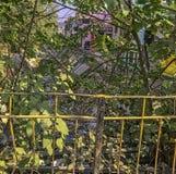 Rio de Kosi atrás do arbusto com desperdícios de flutuação em Ramnagar, Índia fotografia de stock