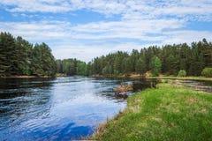 Rio de Mologa que flui nas madeiras Fotos de Stock Royalty Free