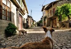 Rio de Onor Photographie stock libre de droits