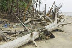 Rio de Pimenta de Caiena dos restos, Guiana Francesa fotos de stock royalty free