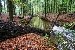 Rio de Skroda que corre através das madeiras decíduos Foto de Stock