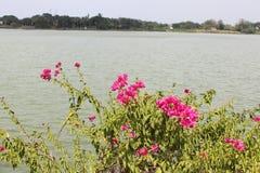 Rio de Tuxpan, México imagens de stock