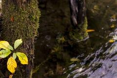 Rio de Una em Bósnia fotografia de stock royalty free