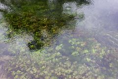 Rio de Una em Bósnia foto de stock royalty free