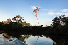 Rio de Yacuma Selva boliviana Imagem de Stock Royalty Free