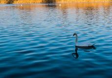 Rio do amor do pássaro foto de stock