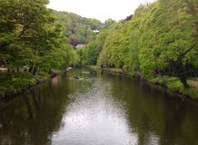 Rio do banho de Matlock e bancos de rio que incluem barcos de enfileiramento Foto de Stock