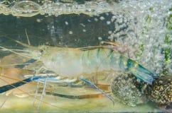 Rio do camarão Fotos de Stock