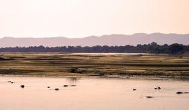 Rio do hipopótamo Imagens de Stock Royalty Free
