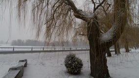Rio do inverno Queda de neve bonita no banco de rio vídeos de arquivo