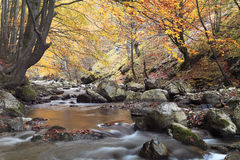 Rio do outono imagens de stock