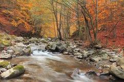 Rio do outono imagem de stock