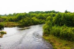 Rio do russo e floresta verde imagens de stock royalty free
