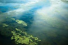 Rio do verão imagens de stock