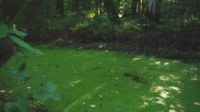 Rio dos sedimentos na floresta video estoque