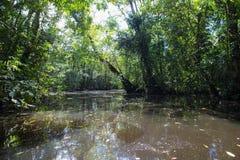 Rio Dulce, Guatemala. The jungle in Rio Dulce river. Guatemala Stock Image