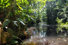 Rio Dulka, Gwatemala Fotografia Stock