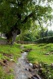 Rio e árvores Fotos de Stock Royalty Free