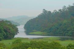 Rio e floresta fotografia de stock