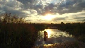 Rio e grama do lago nature na luz solar do por do sol O cão lava no vídeo de movimento do tiro do steadicam da água fotos de stock