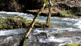 Rio e ilha da montanha com a árvore na Abkhásia vídeos de arquivo