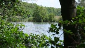 Rio e lago internos do delta do rio na floresta da zona sujeita a inundações e nas planícies, a área protegida da paisagem de Lit filme