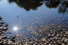 Rio e pedras Foto de Stock