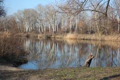 Rio Eagle em Ucrânia Foto de Stock