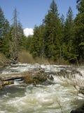 Rio eliminado as plantas pouco vigorozas - angra da união, Oregon fotografia de stock royalty free