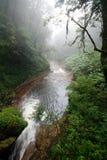 Rio em uma floresta Foto de Stock Royalty Free