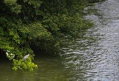Rio enlameado após a chuva foto de stock royalty free