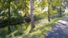 Rio entre árvores fotografia de stock