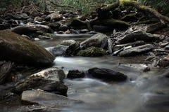 Rio escuro comprimindo e sombrio nas madeiras profundas fotos de stock royalty free