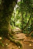Rio font le sentier de randonnée de Boi Photos stock