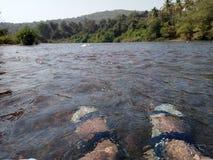 Rio Forest View da água da natureza fotografia de stock royalty free