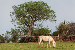 Rio Grande do Sul Brazil Stock Photography