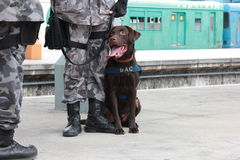 Rio holds anti terrorism training for the Olympic Games Rio 2016 Royalty Free Stock Photos