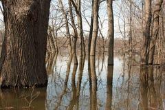 Rio inundado foto de stock royalty free