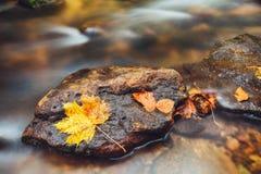 Rio Kamenice no outono, Suíça boêmio Fotografia de Stock
