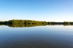 Rio Lagartos Mangrove Landscape Royalty Free Stock Photo