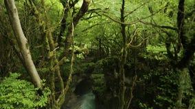 Rio místico que flui na floresta sem tocar verde antiga com árvores enormes, natureza filme