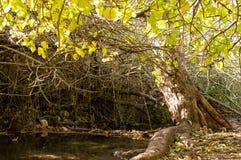 Rio-majaceite in EL Bosque stockfoto