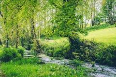 Rio minúsculo no campo irlandês cercado por árvores e por vegetação Fotografia de Stock