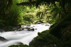 Rio misterioso Fotografia de Stock