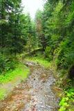 Rio montanhoso na floresta fotos de stock