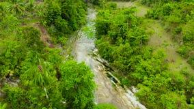 Rio na floresta úmida, Filipinas da montanha, Cebu vídeos de arquivo