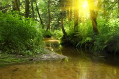 Rio na floresta Fotos de Stock