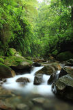 Rio na floresta Foto de Stock Royalty Free