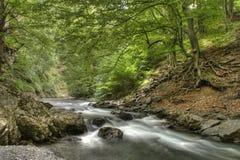 Rio na floresta Fotos de Stock Royalty Free