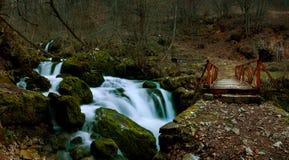 Rio na floresta Imagem de Stock